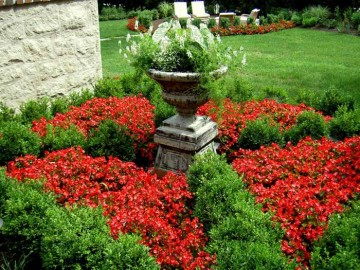 How to Care for Spring Plants in Your Garden
